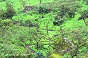 path through lush scenery
