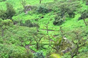 Wandering path through lush scenery